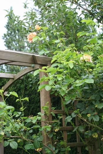 2006 juin au jardin for Juin au jardin