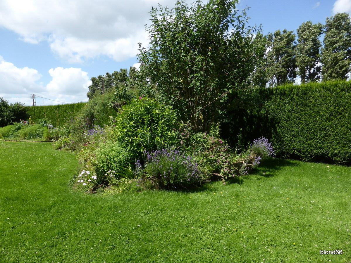 Jardin edito for Jardin hamel papillon 2016