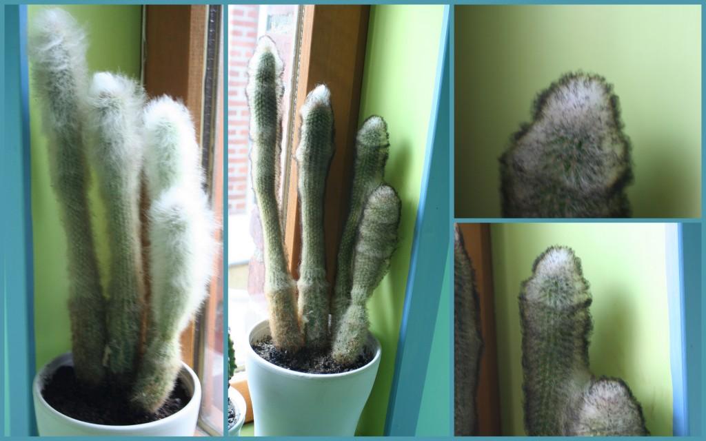 2010-07-cactus
