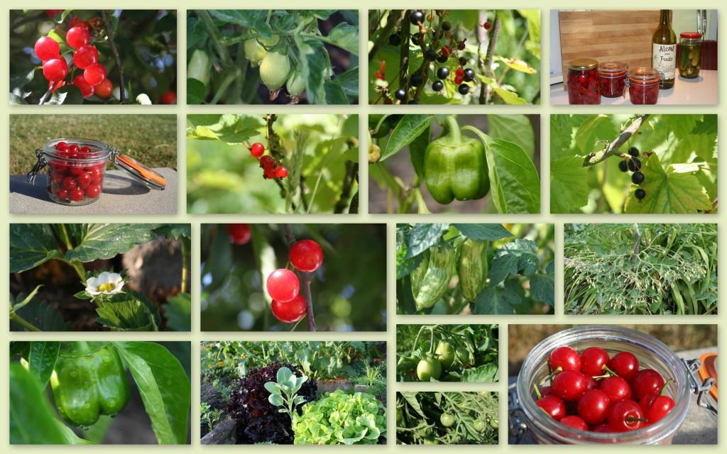2010-07-edito-fruits