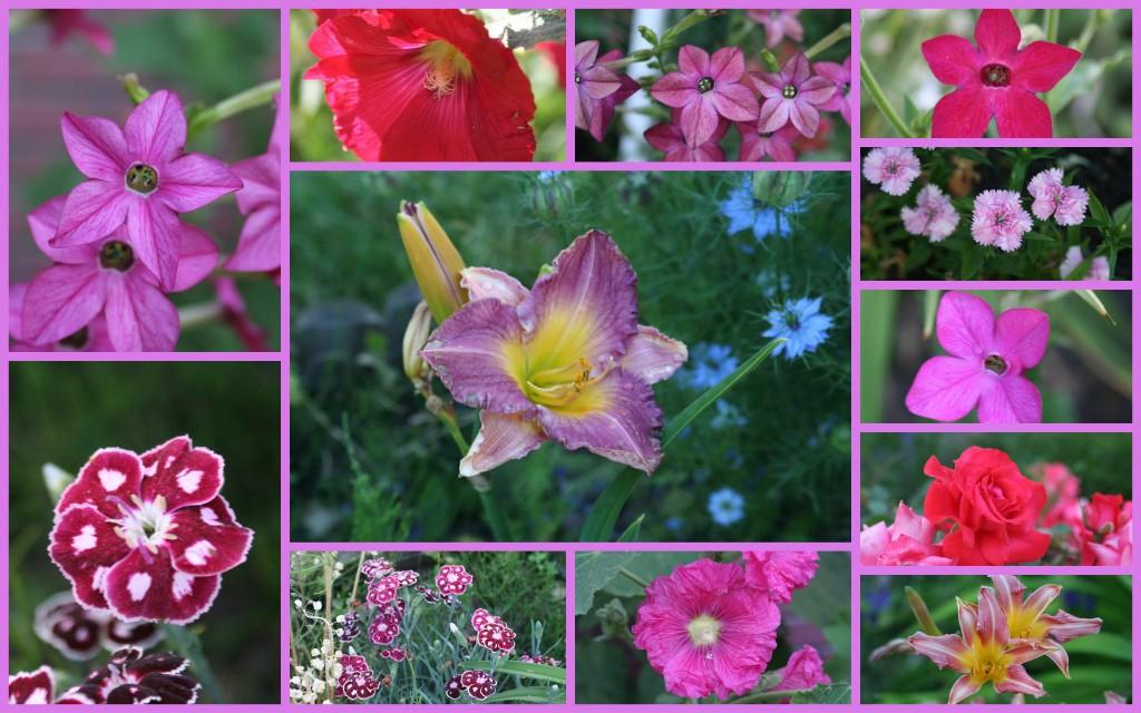 2010-07-edito-rose