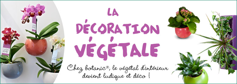 778x278_decoration_vegetale