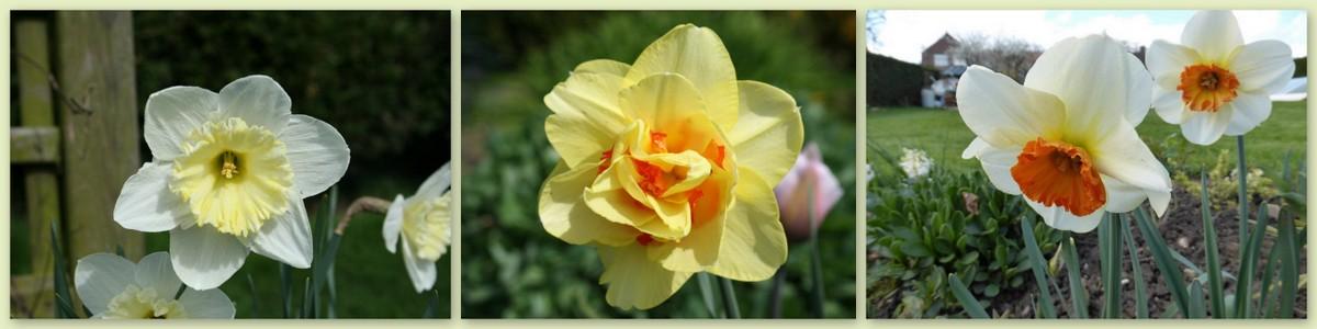 N comme Narcisse