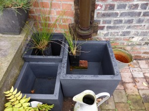 petits bassins