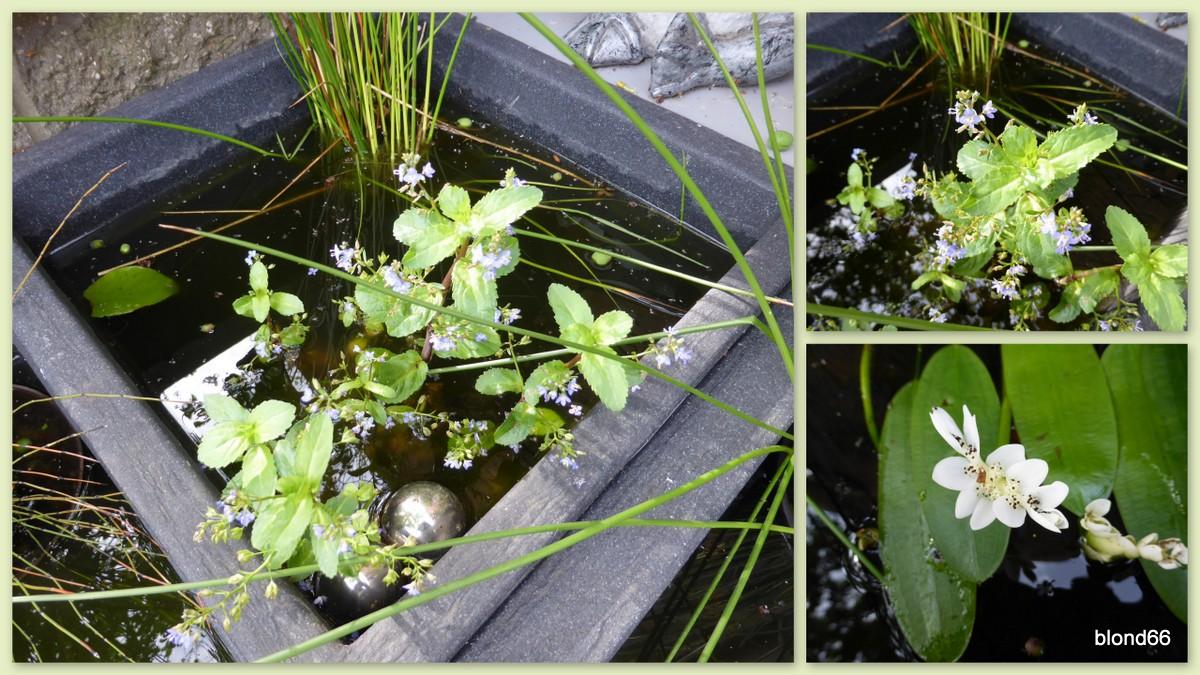 les petits bassins