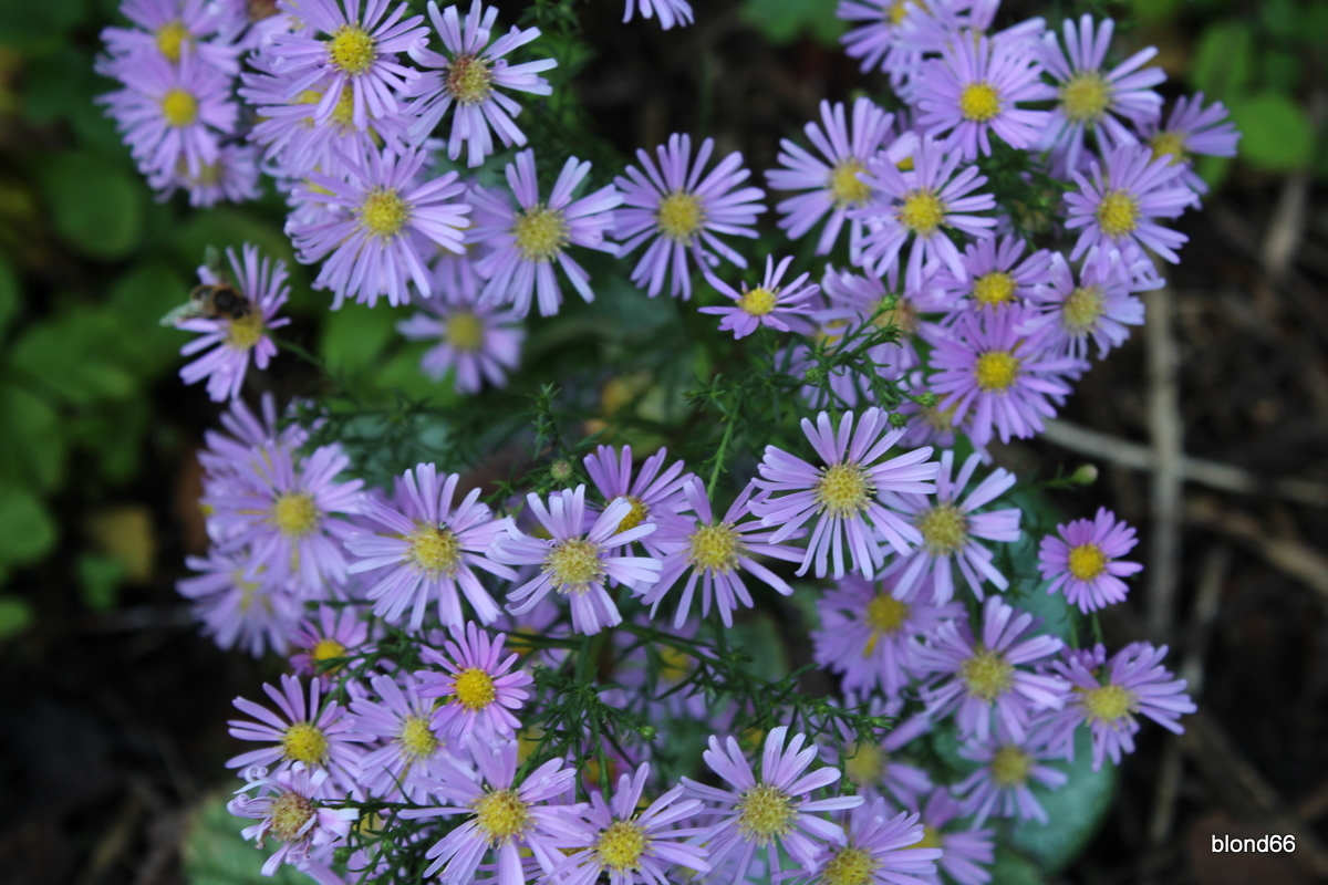 "aster  ""Esther"""
