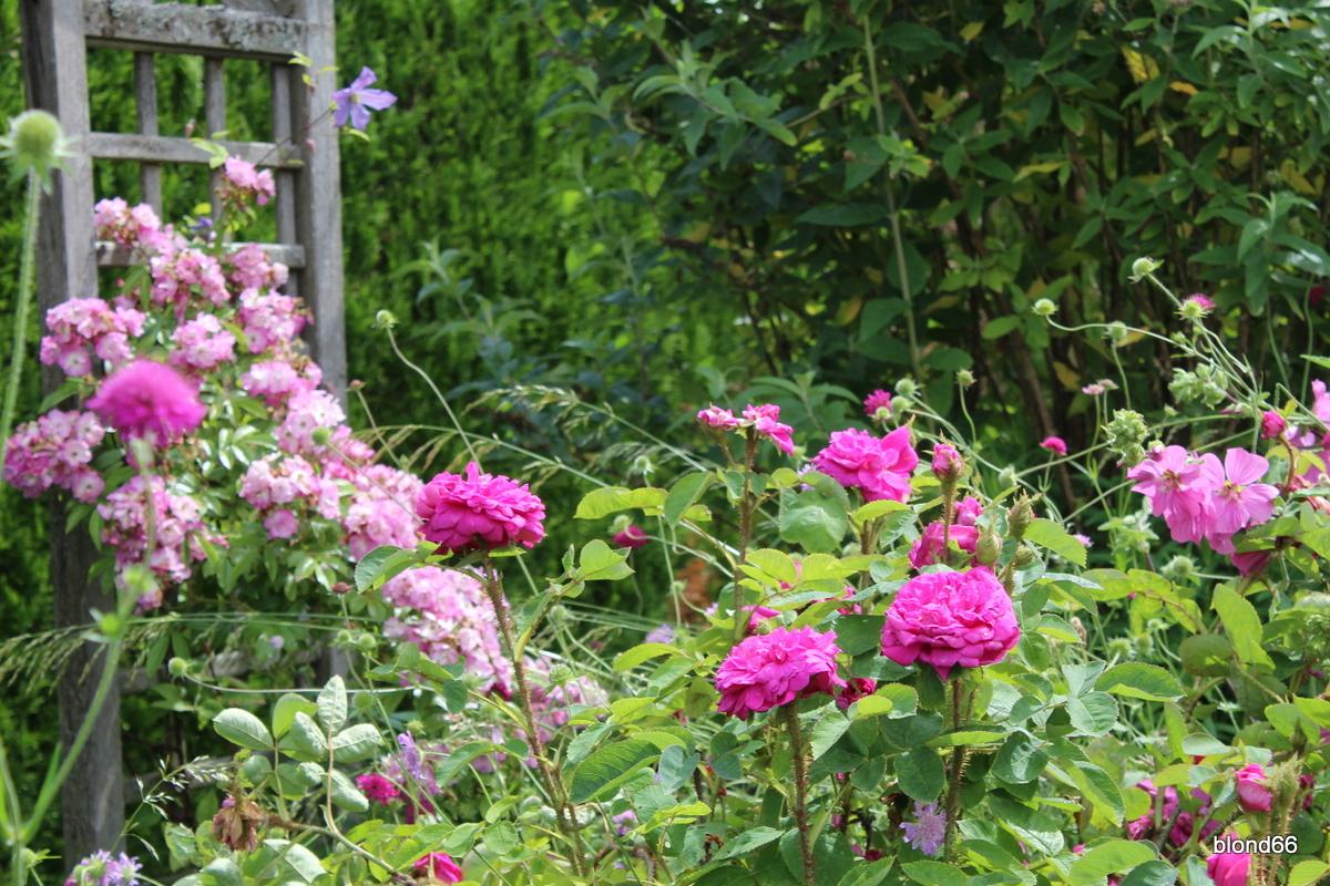 roses en vrac