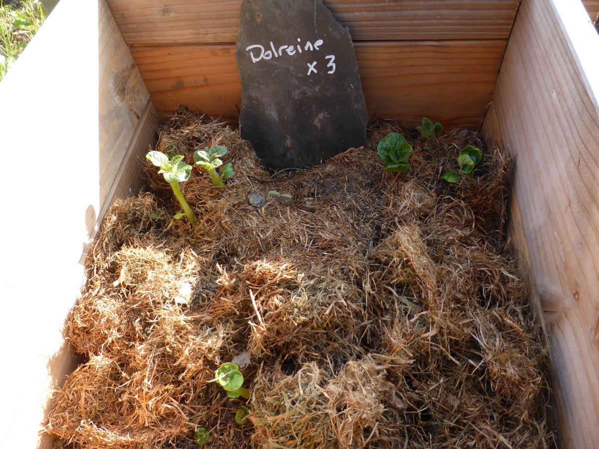 Potager 3 Etages Botanic botanic -